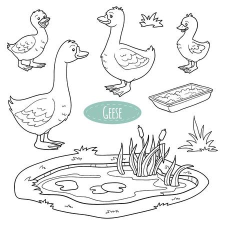 ocas: Conjunto de animales y objetos de granja lindo, familia ganso vectorial