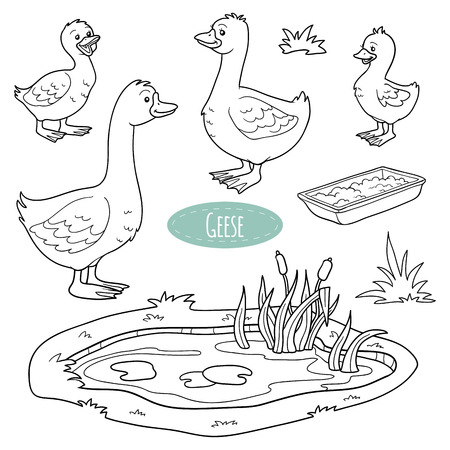 pond water: Set of cute farm animals and objects, vector goose family