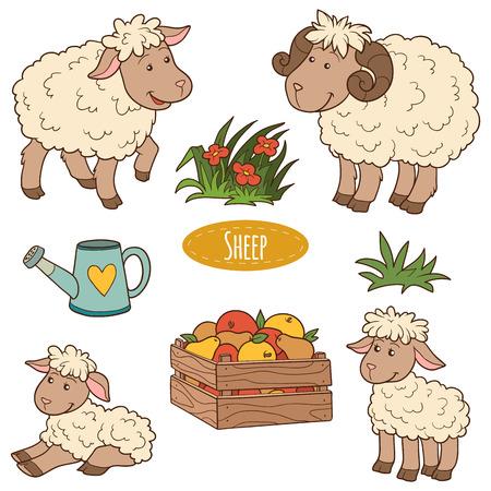 pecora: Set di colori degli animali da allevamento carino e oggetti, pecore famiglia vettore Vettoriali