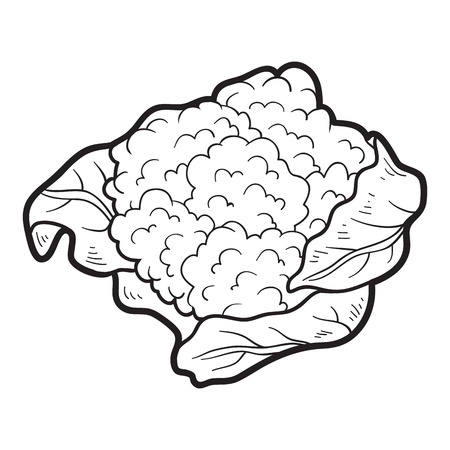 cauliflower: Coloring book for children: fruits and vegetables (cauliflower) Illustration