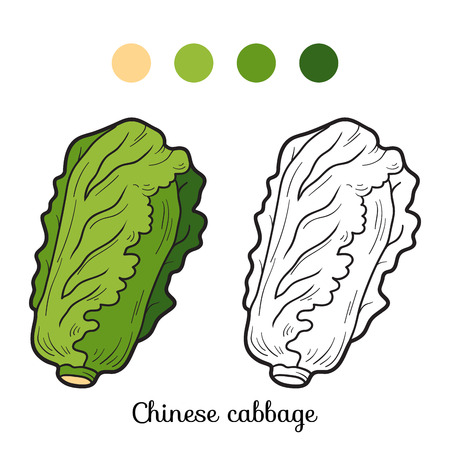 children book: Coloring book for children: fruits and vegetables (chinese cabbage) Illustration