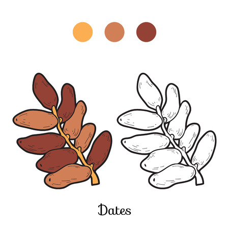 dates fruit: Coloring book for children: fruits and vegetables (dates) Illustration