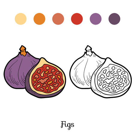 purple fig: Coloring book for children: fruits and vegetables (figs) Illustration