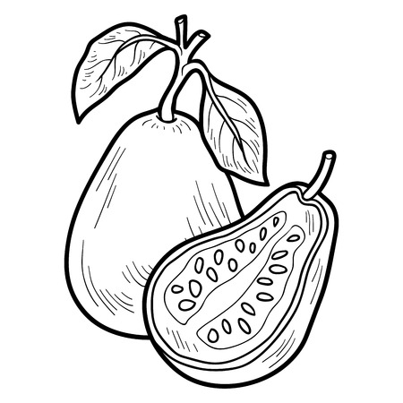 Coloring book for children: fruits and vegetables (guava)