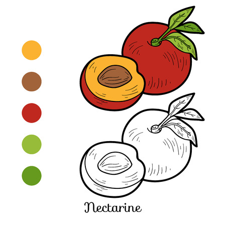 nectarine: Coloring book for children: fruits and vegetables (nectarine) Illustration