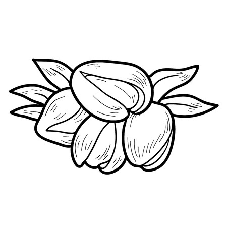 pistachios: Coloring book for children: fruits and vegetables (pistachios)