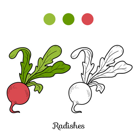 vegetables on white: Coloring book for children: fruits and vegetables (radishes) Illustration