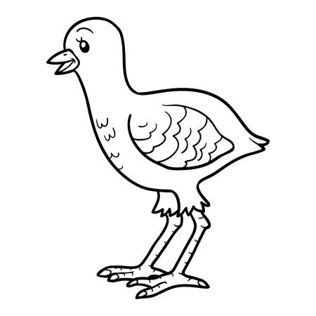 gobbler: Coloring book for children (turkey chick) Illustration