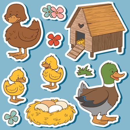 pato caricatura: El conjunto de colores de los animales del campo lindos y objetos, vector de la familia de pato y objetos