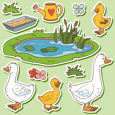 ducks water: Color set of cute farm animals and objects, vector family goose and objects