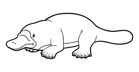 platypus: Coloring book for children: platypus Illustration