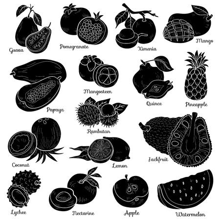 limon caricatura: Conjunto incoloro con frutas tropicales, pegatinas de dibujos animados de vectores para ni�os Vectores