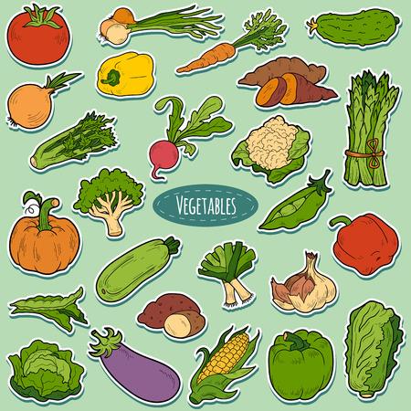 어린이를위한 야채, 벡터 만화 스티커 세트 색상 일러스트