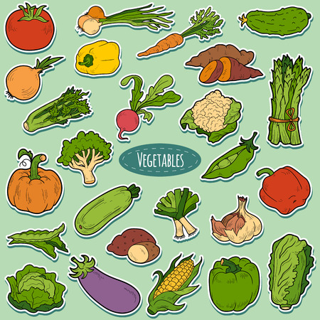fresh vegetables: Color set with vegetables, vector cartoon stickers for children