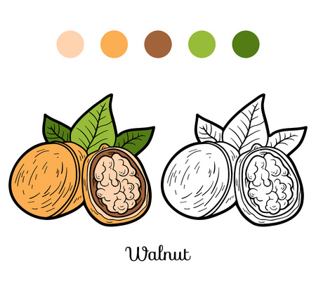 walnut: Coloring book, education game for children: fruits and vegetables (walnut)