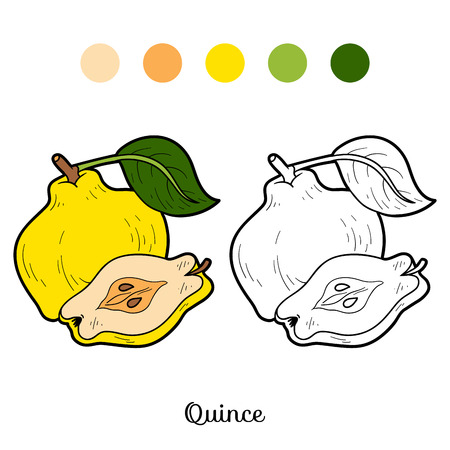 Coloring book for children: fruits and vegetables (quince)