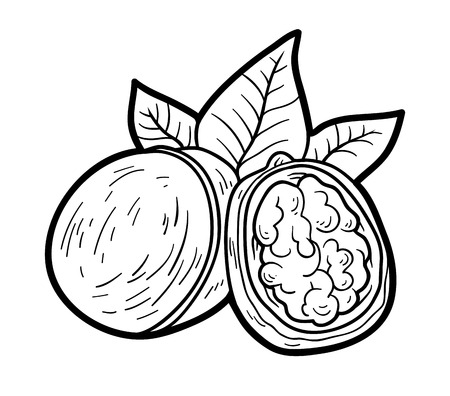 Coloring book, education game for children: fruits and vegetables (walnut)