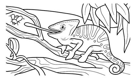 chameleon lizard: Coloring book, education game for children (chameleon)