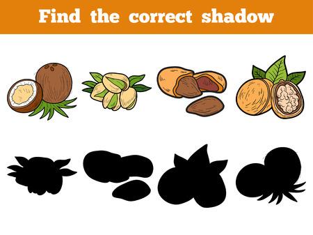 educativo: Encuentra la sombra correcta, juego de la educación para los niños (frutos secos) Vectores