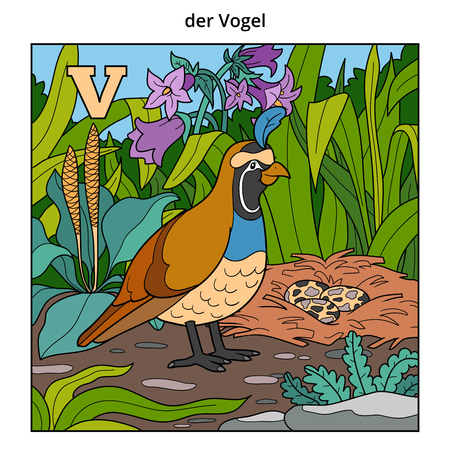 German alphabet, vector illustration (letter V). Color image (quail, bird and background)