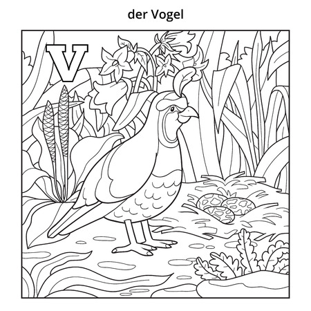 birds scenery: German alphabet, vector illustration (letter V). Colorless image (quail, bird and background)