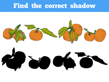 correct: Find the correct shadow, education game for children. Vector color set of orange fruits, mandarin, tangerin