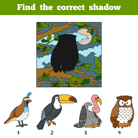 game bird: Find the correct shadow, education game for children. Find bird by shadow