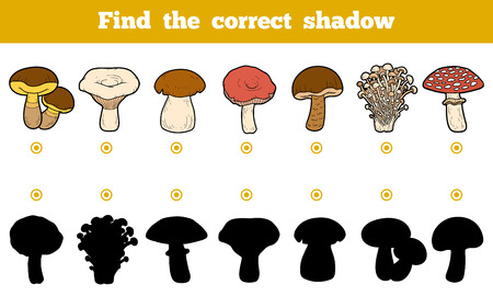 Find the correct shadow, education game for children. Set of edible mushrooms.