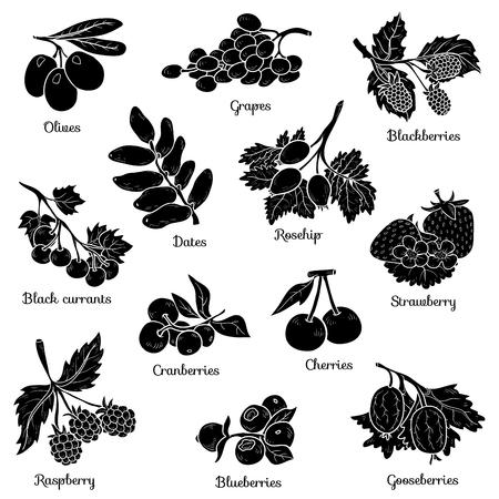 Shadow set with berries, vector cartoon stickers for children