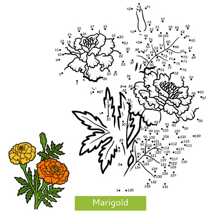 Numbers game, education dot to dot game for children, flower Marigold