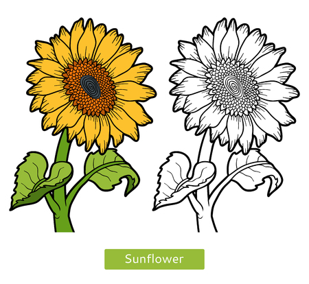 colorless: Coloring book for children, flower Sunflower Illustration