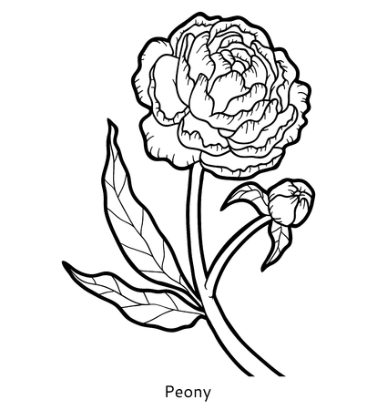 printable coloring pages: Coloring book for children, flower Peony
