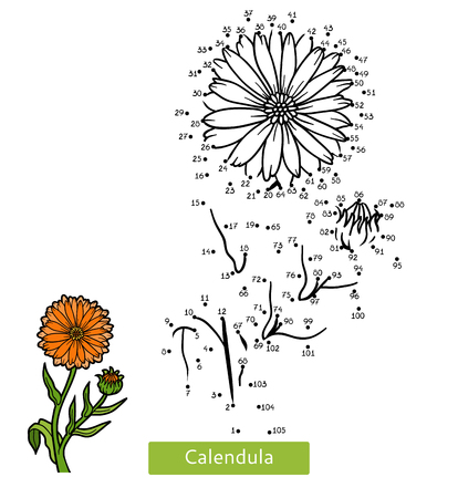 Numbers game, education dot to dot game for children, flower Calendula Illustration
