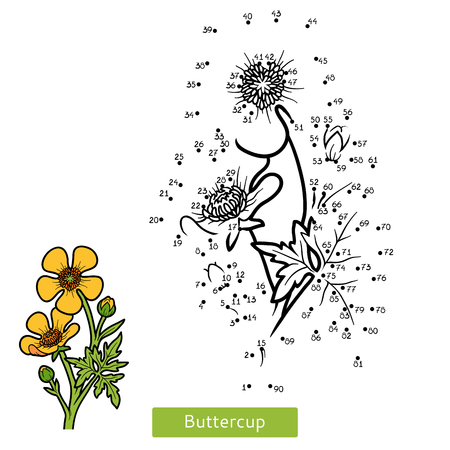 Numbers game, education dot to dot game for children, flower Buttercup
