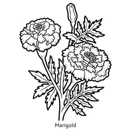 Libro De Colorante Para Los Niños, Flor De La Maravilla ...