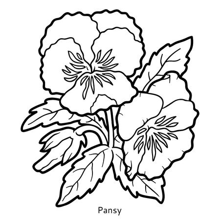 libro da colorare per i bambini, fiore Pansy