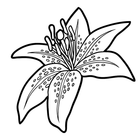 printable coloring pages: Coloring book for children, flower Lily