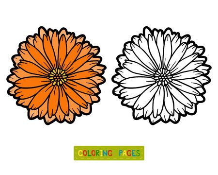 calendula: Coloring book for children, flower Calendula