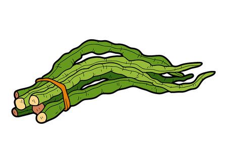 long bean: Vector color illustration, colorful vegetables, Chinese long bean Illustration