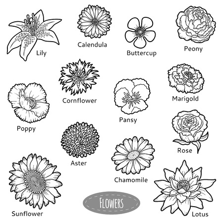 aster: Vector set of flowers, black and white nature collection