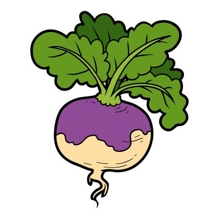 turnip: Vector color illustration, colorful vegetables, turnip Illustration