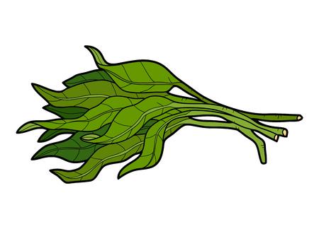 Vector kleur afbeelding, kleurrijke groenten, Water spinazie Stock Illustratie