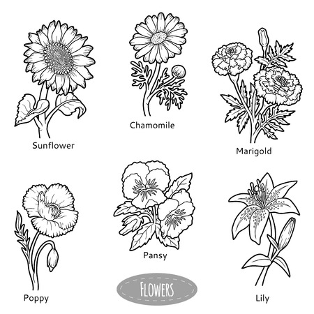 Vector set of flowers, black and white nature collection