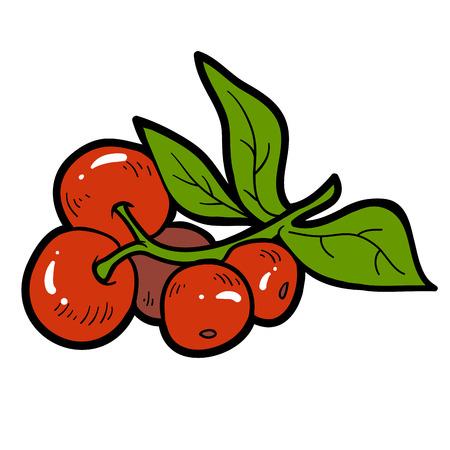 cranberries: Color image, vector cartoon berry, Cranberries