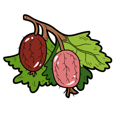 spiny: Color image, vector cartoon berry, Gooseberries
