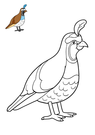 coloration: Coloring book for children, Quail