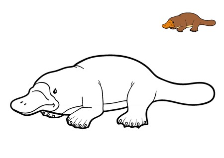 Coloring book for children, Platypus