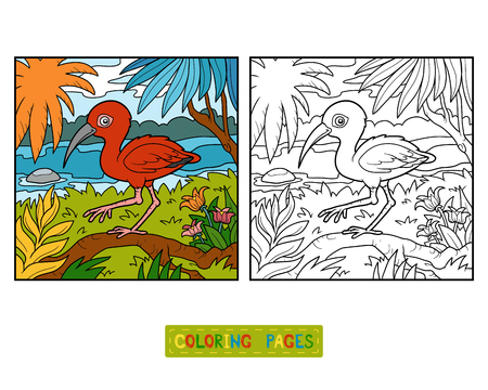 Coloring book for children, Scarlet ibis and background