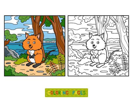 new zealand landscape: Coloring book for children, Quokka Illustration