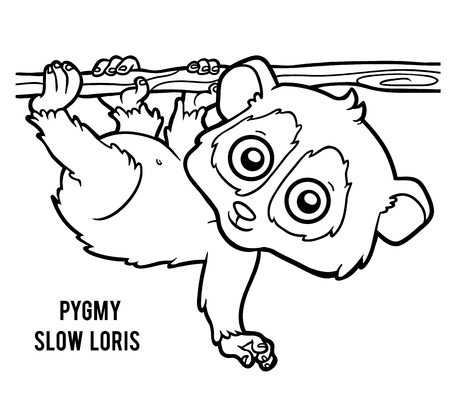 Coloring book for children, Pygmy slow loris